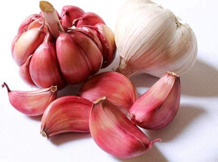 garlic-purple