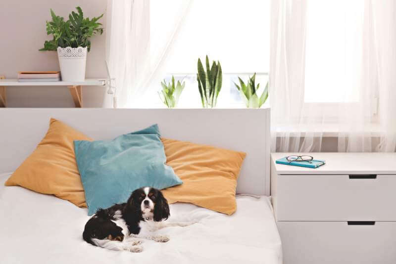 dog-in-the-bedroom