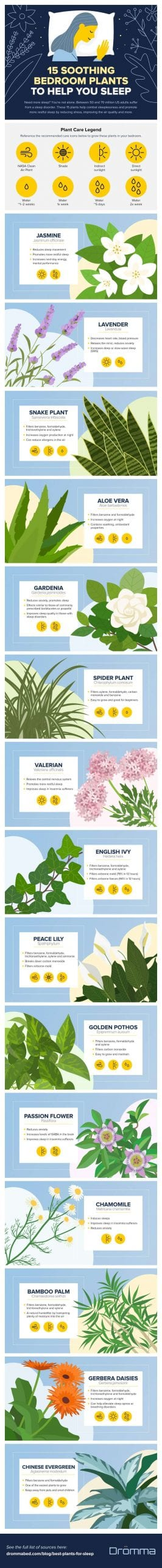 15 best indoor plants for sleep
