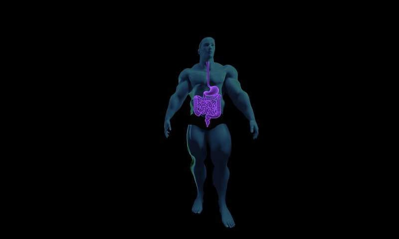 digestive-system-anatomy