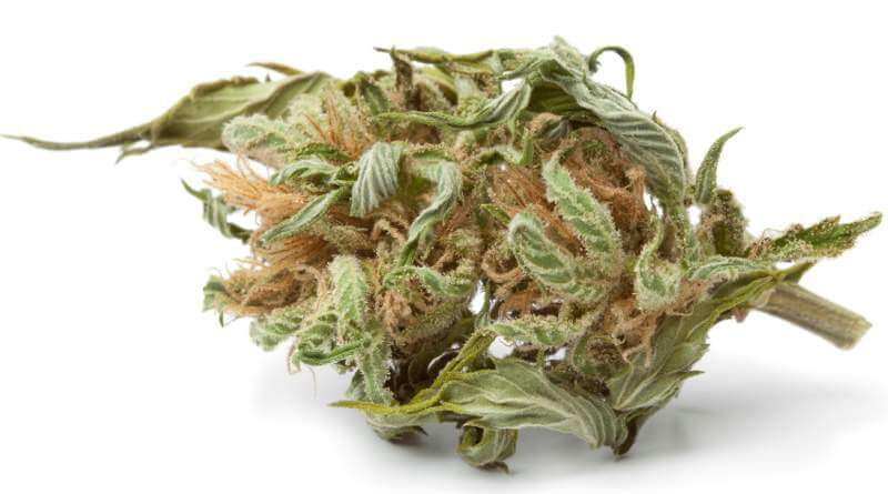 dried-marijuana-bud-with-visible-thc