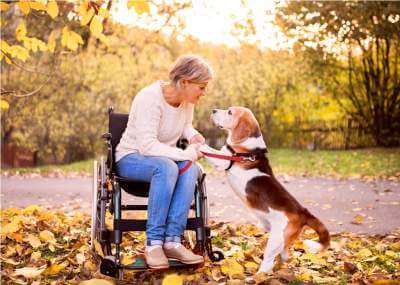 a-senior-woman-in-wheelchair-with-dog-in-autumn
