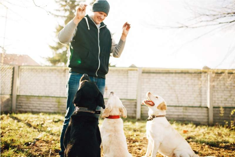 cynologist-works-with-cop-dogs-training-outside