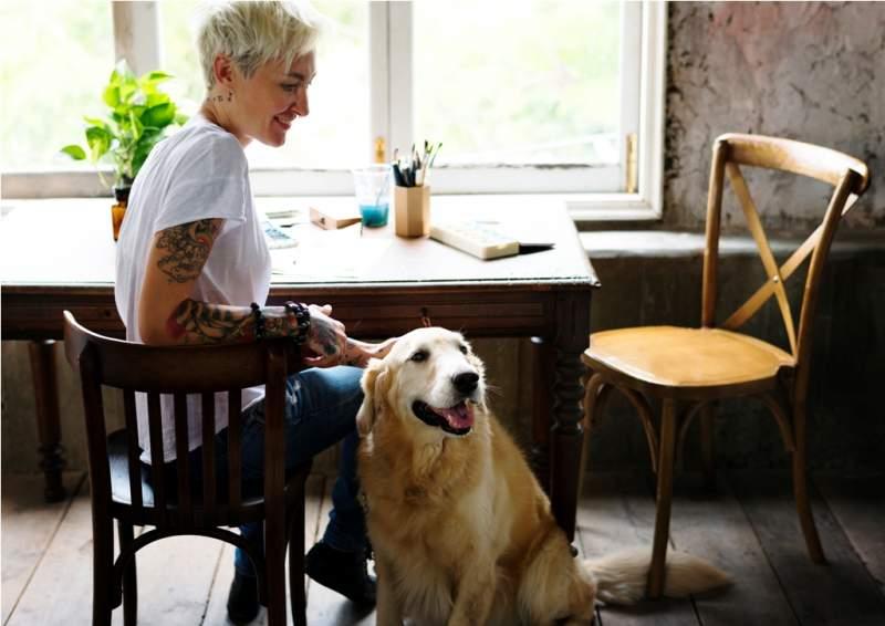 golden-retriever-dog-sitting-on-the-wooden-floor