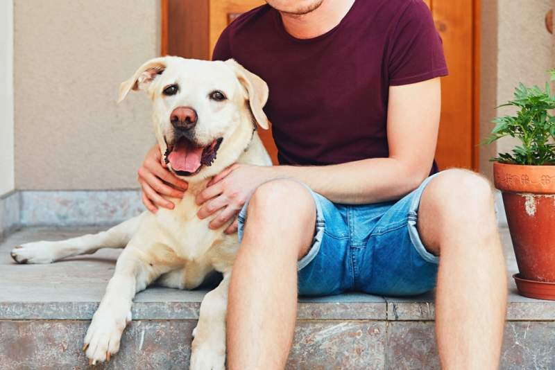happy-dog-with-his-owner