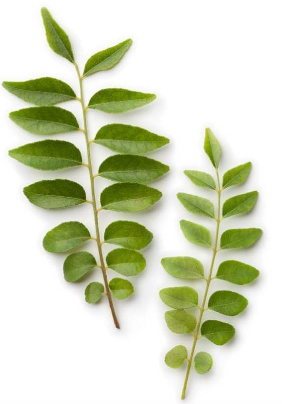 fresh-curry-leaves