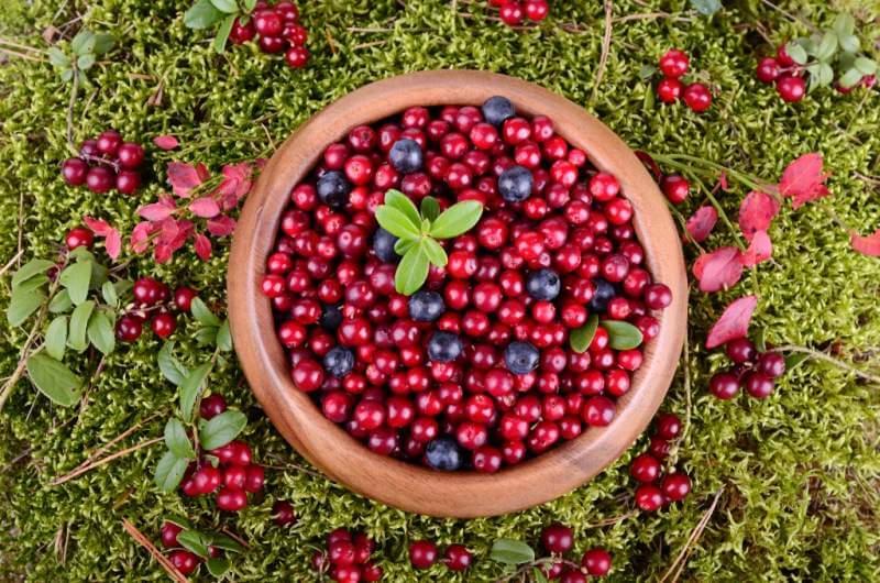 autumn-berrys
