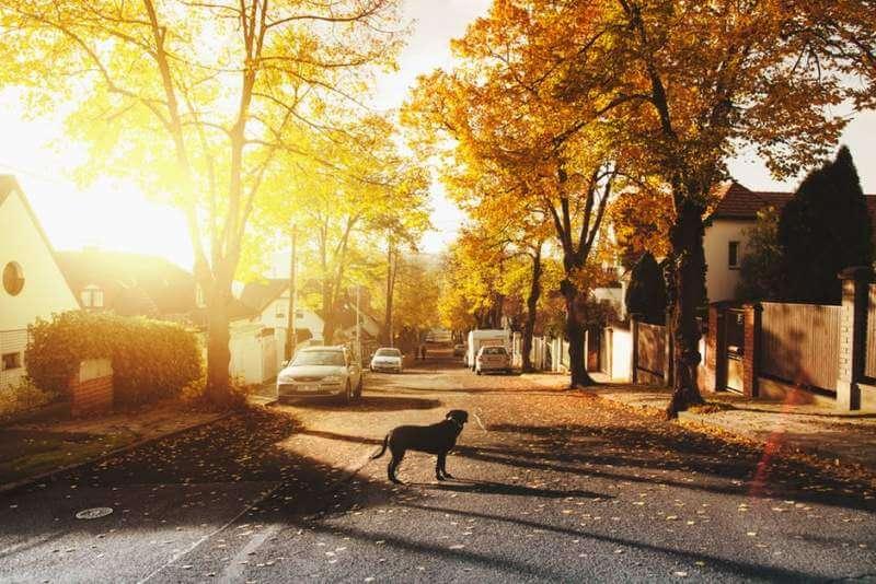sunrise road dog