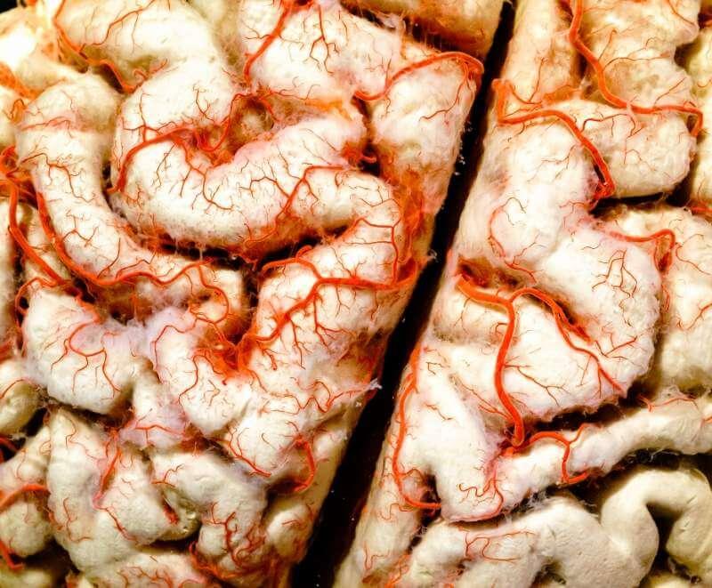 human-brain-closeup