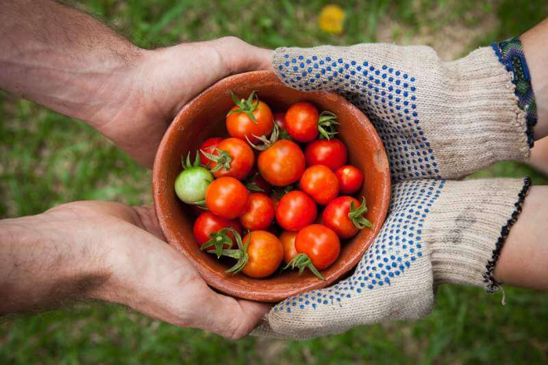 tomatoes-bowl