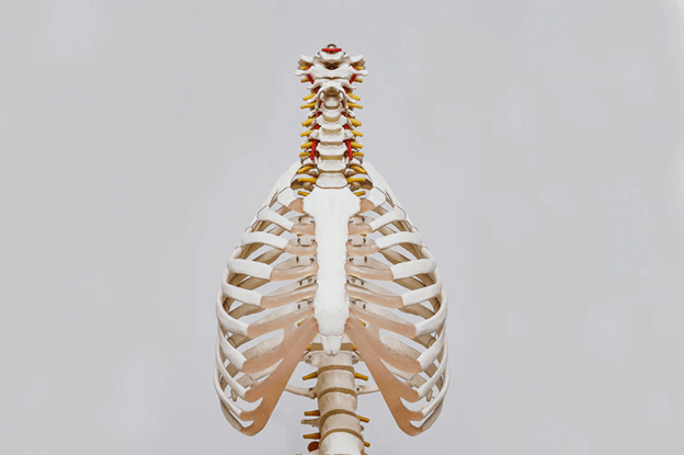 spine and joints