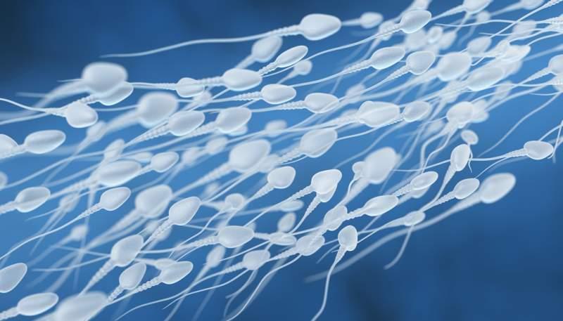 human-sperm-flow